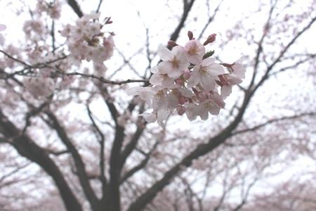 http://cosol.jp/shinsotsu/shimizu_20160425_01.JPG